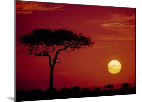 Wild Beast Migration, Masai Mara, Kenya-Dee Ann Pederson-Mounted Art Print