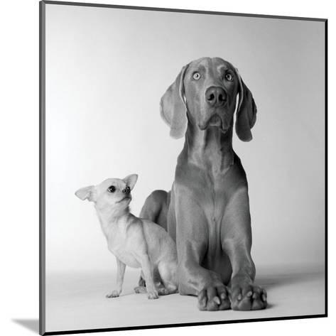 Max and Roxie-Amanda Jones-Mounted Art Print