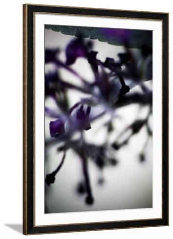 Vegetal / 4225, 2008-Laetizia Bazzoni-Framed Art Print