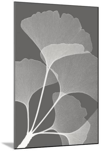 Ginkgos II-Steven N^ Meyers-Mounted Art Print