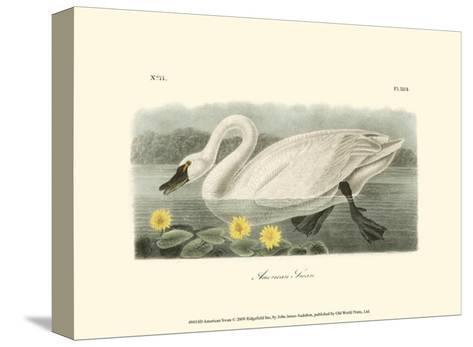 American Swan-John James Audubon-Stretched Canvas Print