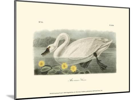 American Swan-John James Audubon-Mounted Art Print