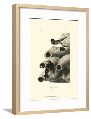 Cliff Swallow-John James Audubon-Framed Art Print
