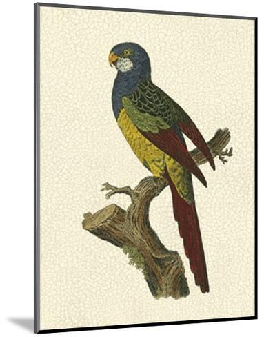 Crackled Antique Parrot IV-George Shaw-Mounted Art Print