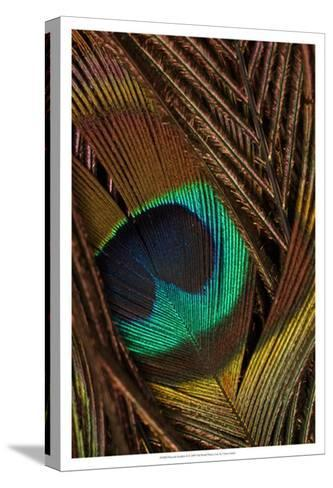 Peacock Feathers II--Stretched Canvas Print