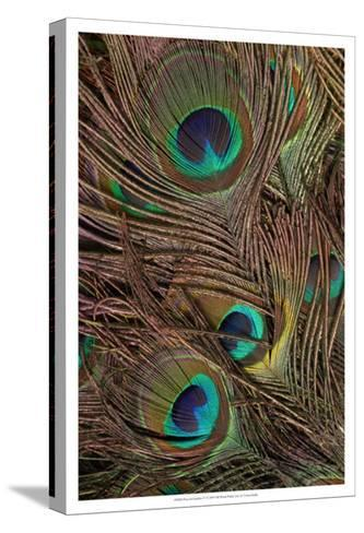 Peacock Feathers IV--Stretched Canvas Print