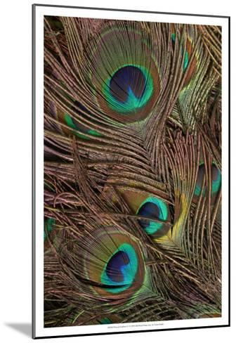 Peacock Feathers IV--Mounted Art Print