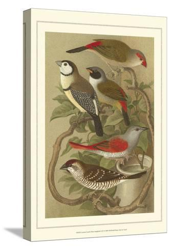 Pet Songbirds III-Cassel-Stretched Canvas Print