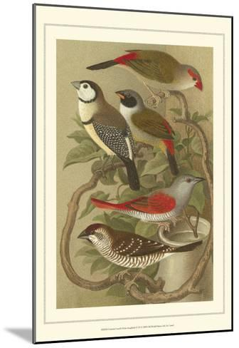 Pet Songbirds III-Cassel-Mounted Art Print