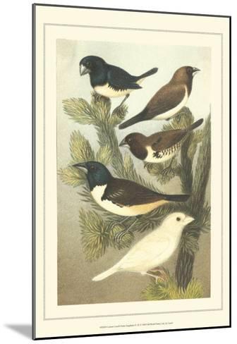 Pet Songbirds IV-Cassel-Mounted Art Print