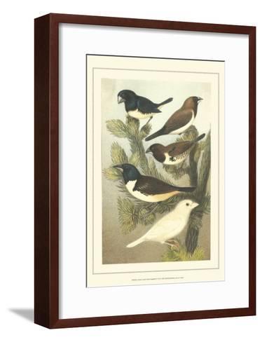 Pet Songbirds IV-Cassel-Framed Art Print