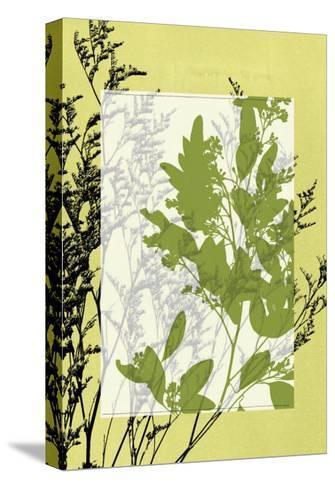 Translucent Wildflowers IV-Jennifer Goldberger-Stretched Canvas Print