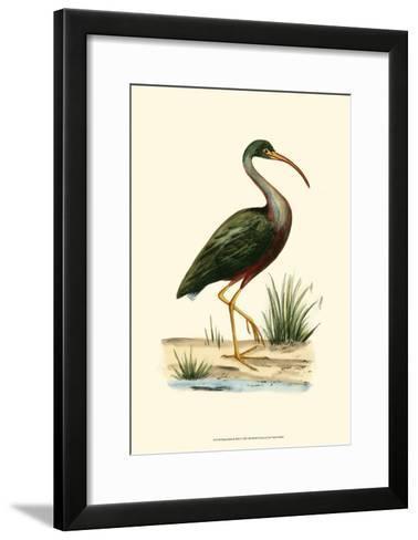 Water Birds II--Framed Art Print