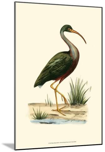 Water Birds II--Mounted Art Print