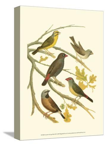 Canaries and Cage Birds III-Cassel-Stretched Canvas Print