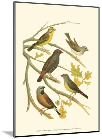Canaries and Cage Birds III-Cassel-Mounted Art Print