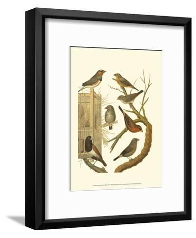 Canaries and Cage Birds IV-Cassel-Framed Art Print