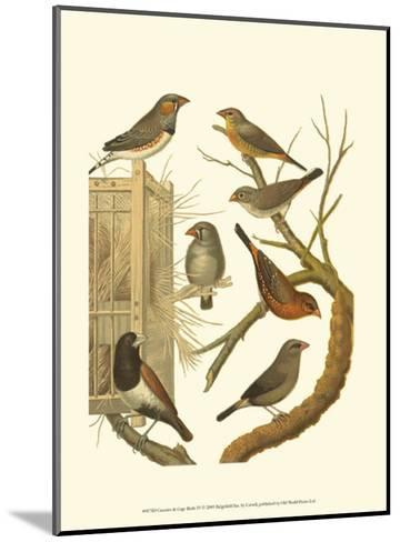 Canaries and Cage Birds IV-Cassel-Mounted Art Print
