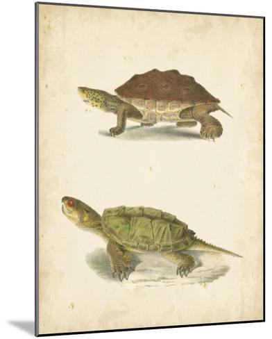 Turtle Duo II-J^W^ Hill-Mounted Giclee Print