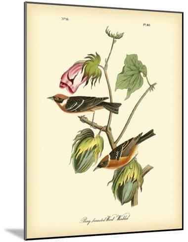 Bay Breasted Wood-Warbler-John James Audubon-Mounted Giclee Print