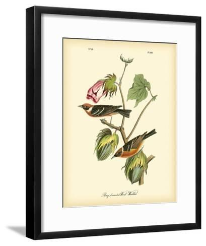 Bay Breasted Wood-Warbler-John James Audubon-Framed Art Print