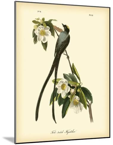 Fork-Tailed Flycatcher-John James Audubon-Mounted Giclee Print