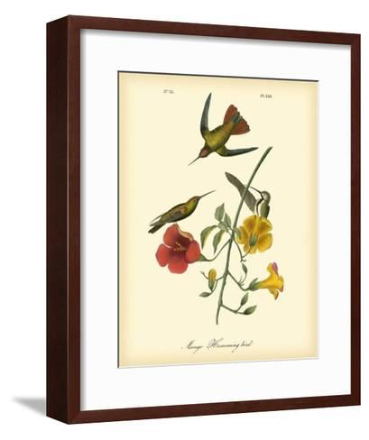 Mango Hummingbird-John James Audubon-Framed Art Print