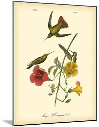 Mango Hummingbird-John James Audubon-Mounted Giclee Print