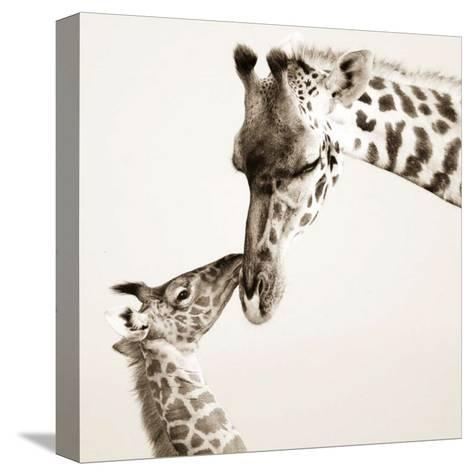 Precious Moments I-Susann & Frank Parker-Stretched Canvas Print
