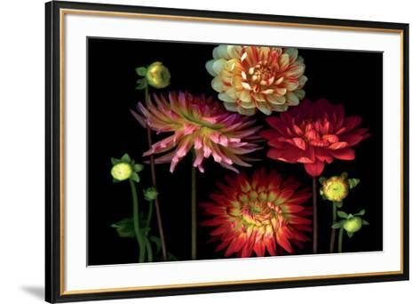 Dahlia Garden-Pip Bloomfield-Framed Art Print