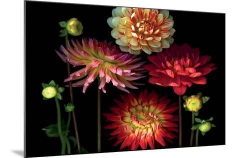 Dahlia Garden-Pip Bloomfield-Mounted Art Print