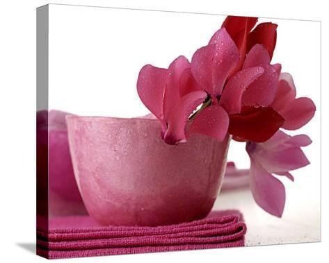 Pink Cyclamens--Stretched Canvas Print