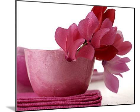 Pink Cyclamens--Mounted Art Print
