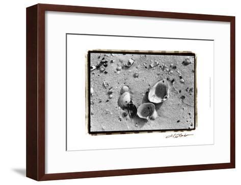 Sand Treasures IV-Laura Denardo-Framed Art Print