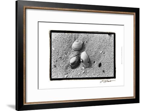 Sand Treasures V-Laura Denardo-Framed Art Print