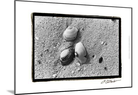 Sand Treasures V-Laura Denardo-Mounted Art Print