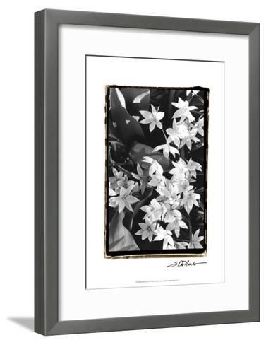 Springtime Garden VII-Laura Denardo-Framed Art Print