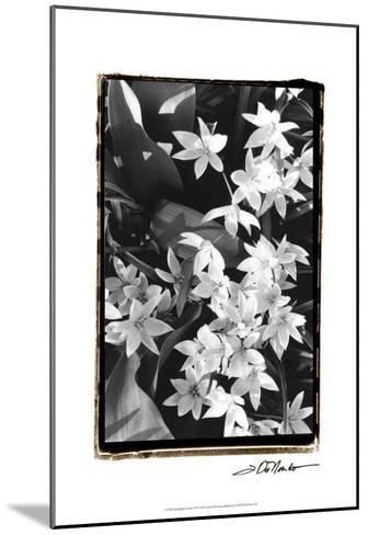 Springtime Garden VII-Laura Denardo-Mounted Art Print