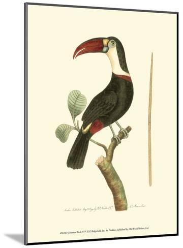 Crimson Birds VI-Frederick P^ Nodder-Mounted Art Print