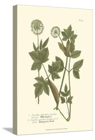 Leaves IV-Johann Wilhelm Weinmann-Stretched Canvas Print