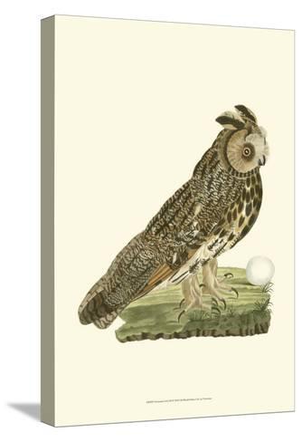Owls III-Nozeman-Stretched Canvas Print