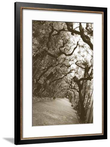 Boboli Arbor, Italy-Meg Mccomb-Framed Art Print