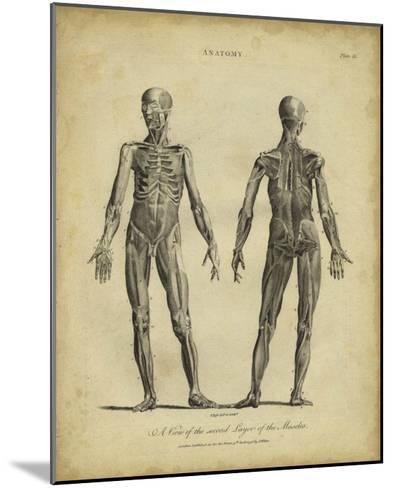 Anatomy Study III-Jack Wilkes-Mounted Giclee Print