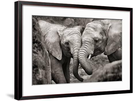 Elephants in Love-Marina Cano-Framed Art Print