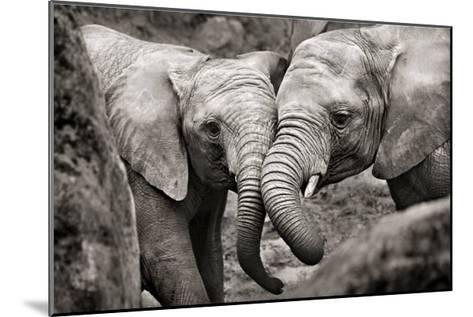 Elephants in Love-Marina Cano-Mounted Art Print