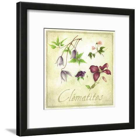 Clématites-Vincent Perriol-Framed Art Print
