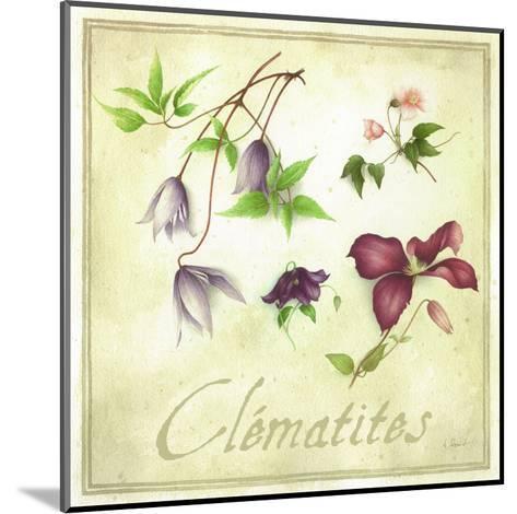 Clématites-Vincent Perriol-Mounted Art Print