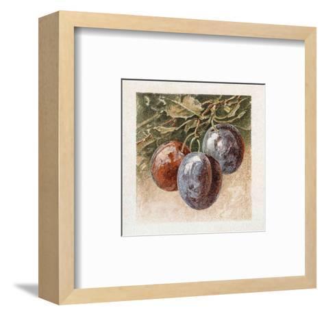 Prunes-Laurence David-Framed Art Print