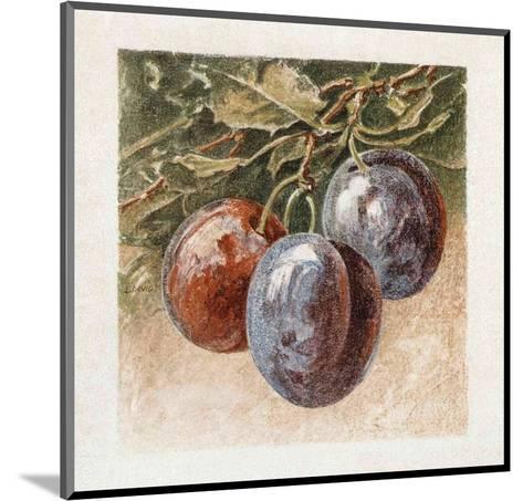 Prunes-Laurence David-Mounted Art Print