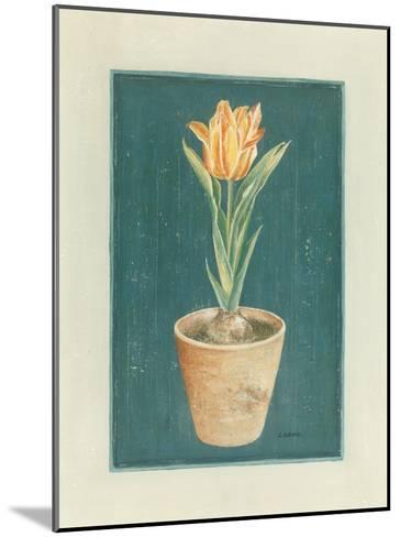 Tulipe Jaspé-Laurence David-Mounted Art Print